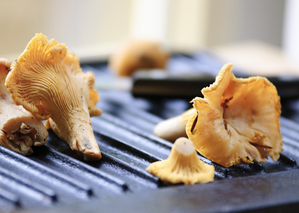 Chantrelle Mushrooms